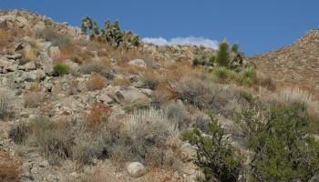 Климаты далекого прошлого (70—0,5 млн. лет назад)